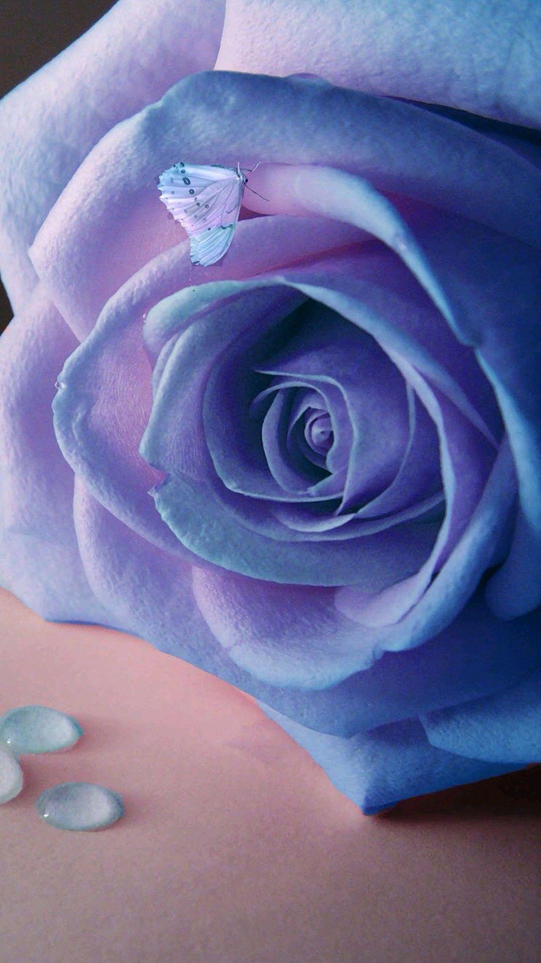 Розы на воде картинки на айфон, смайлов одноклассниках