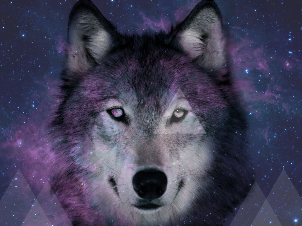 Iphone wallpaper tumblr wolf - Explore And Share Space Wolves Wallpaper On Wallpapersafari