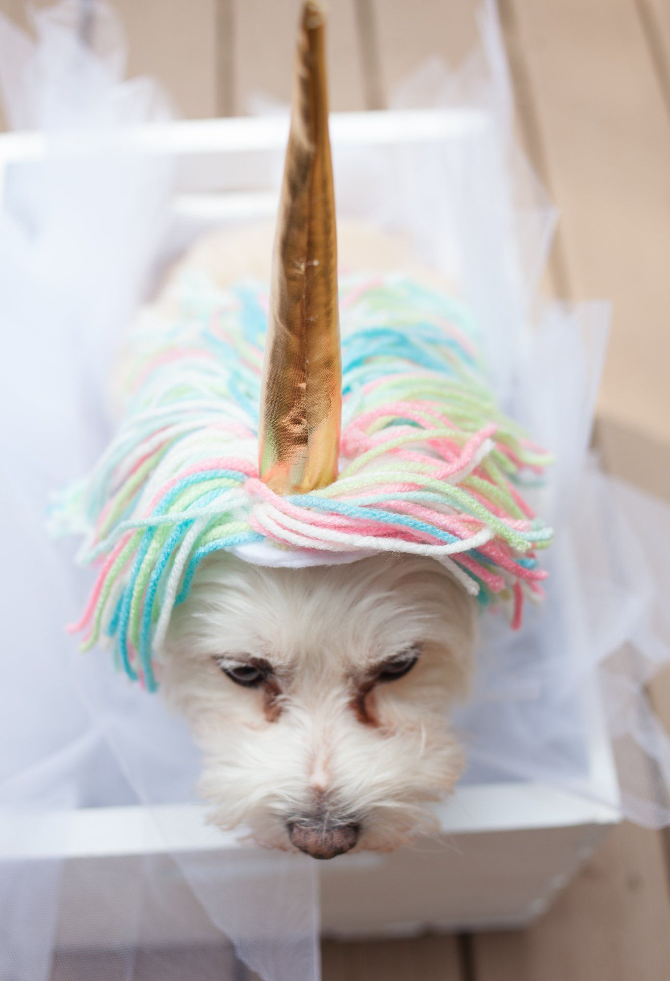 How To Make A Unicorn Costume For Your Dog Dog Halloween
