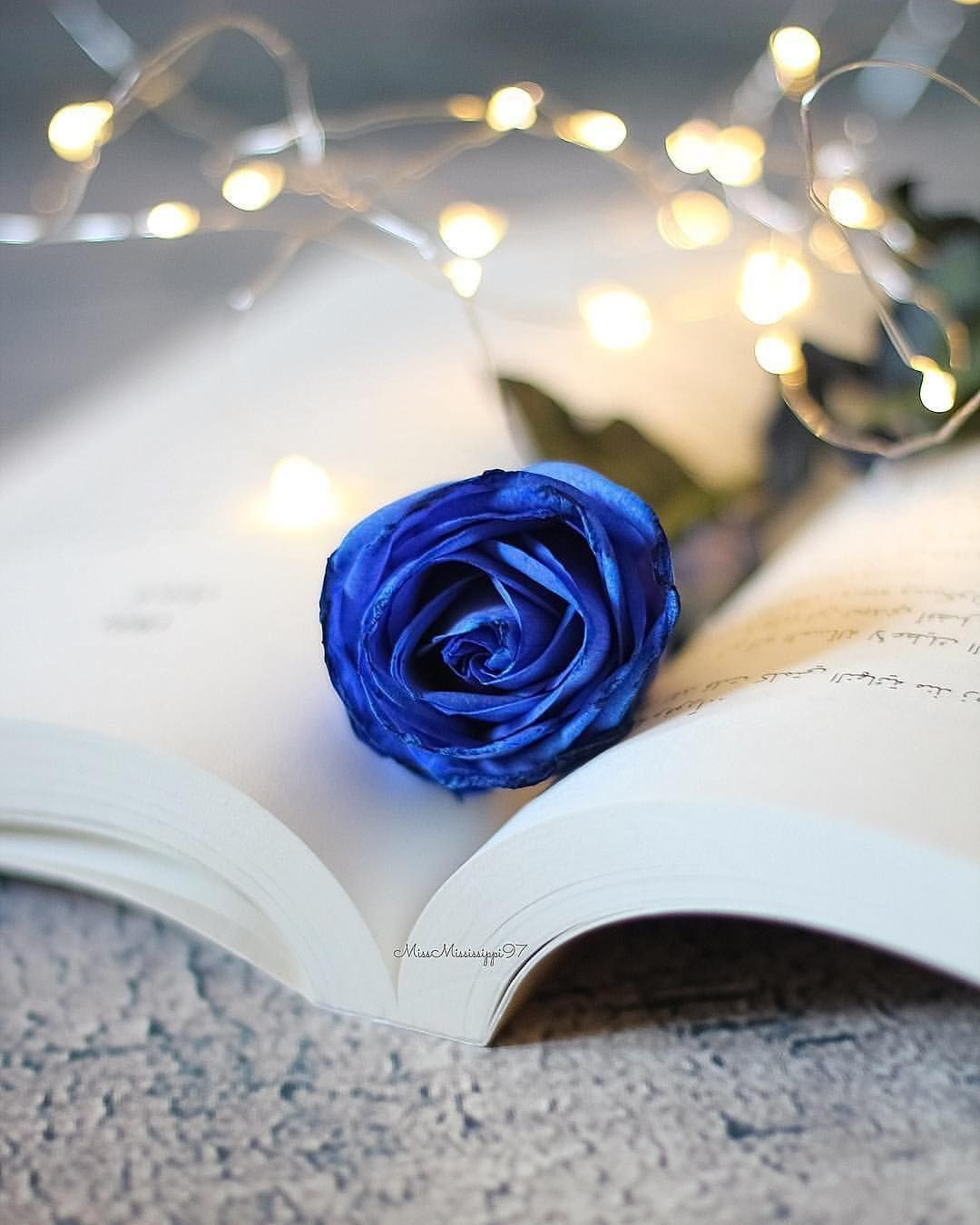 Raindrops And Roses Blue Roses Wallpaper Blue Rose Tattoos Raindrops And Roses