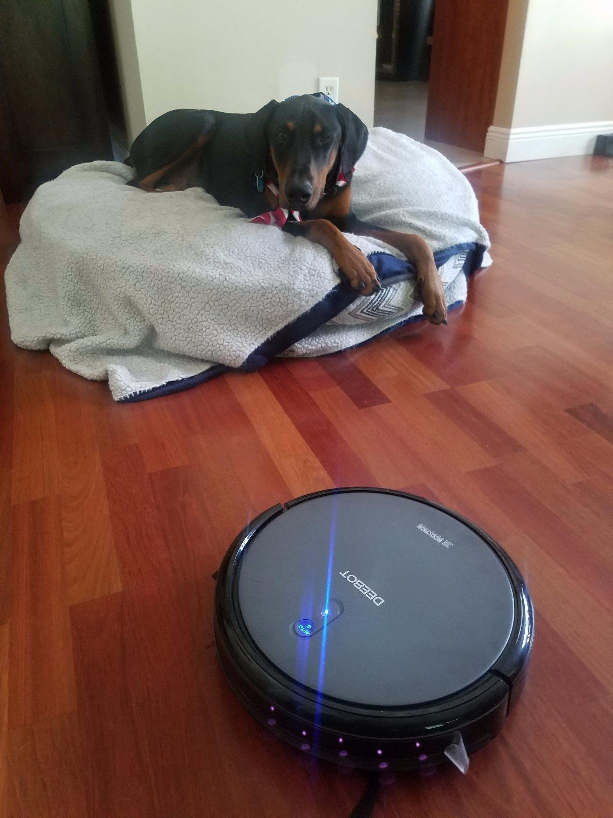 Top 15 Best Vacuum For Dog Hair Reviews In 2020 Pet Hair Vacuum Best Pet Hair Vacuum Dog Hair Vacuum