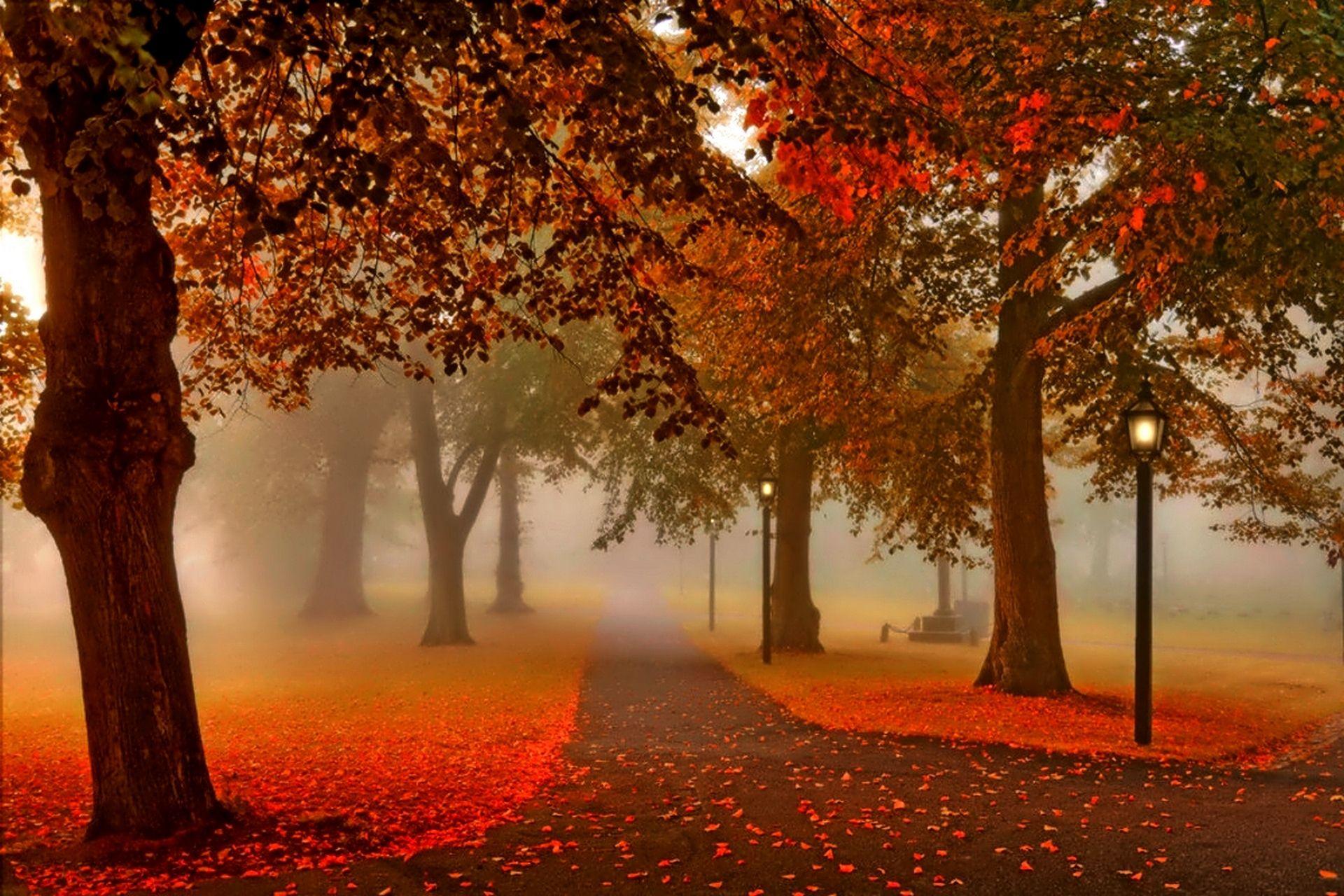 Autumn Park Leaves Sunset Wallpaper 2 Jpg 1920 1280 Sunset Nature Autumn Scenery Autumn Park