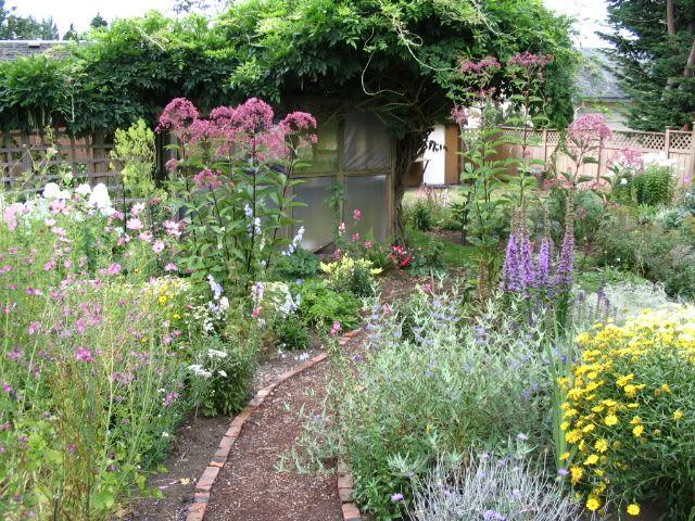 Thalictrum delavayi \'Hewitt\'s Double\' | Dream Gardens | Pinterest ...