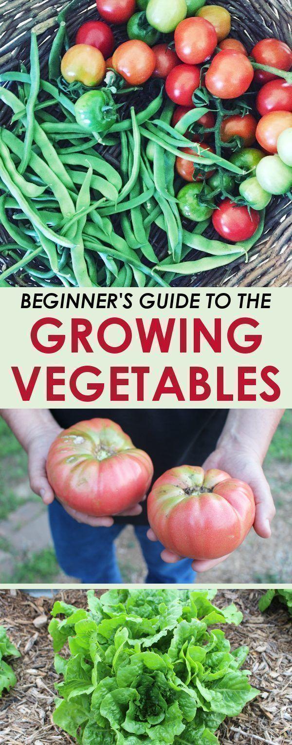 Easy Vegetable Garden Idea For Beginners Best Way To 400 x 300