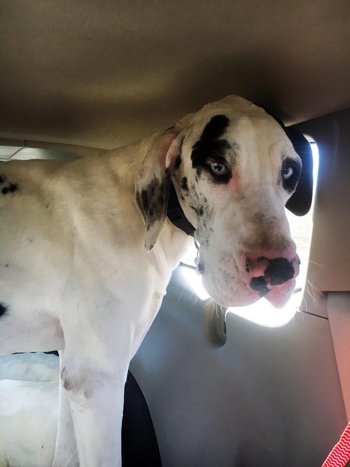 Adopt Hannah On Adoptable Pets Pinterest Pets Dogs And