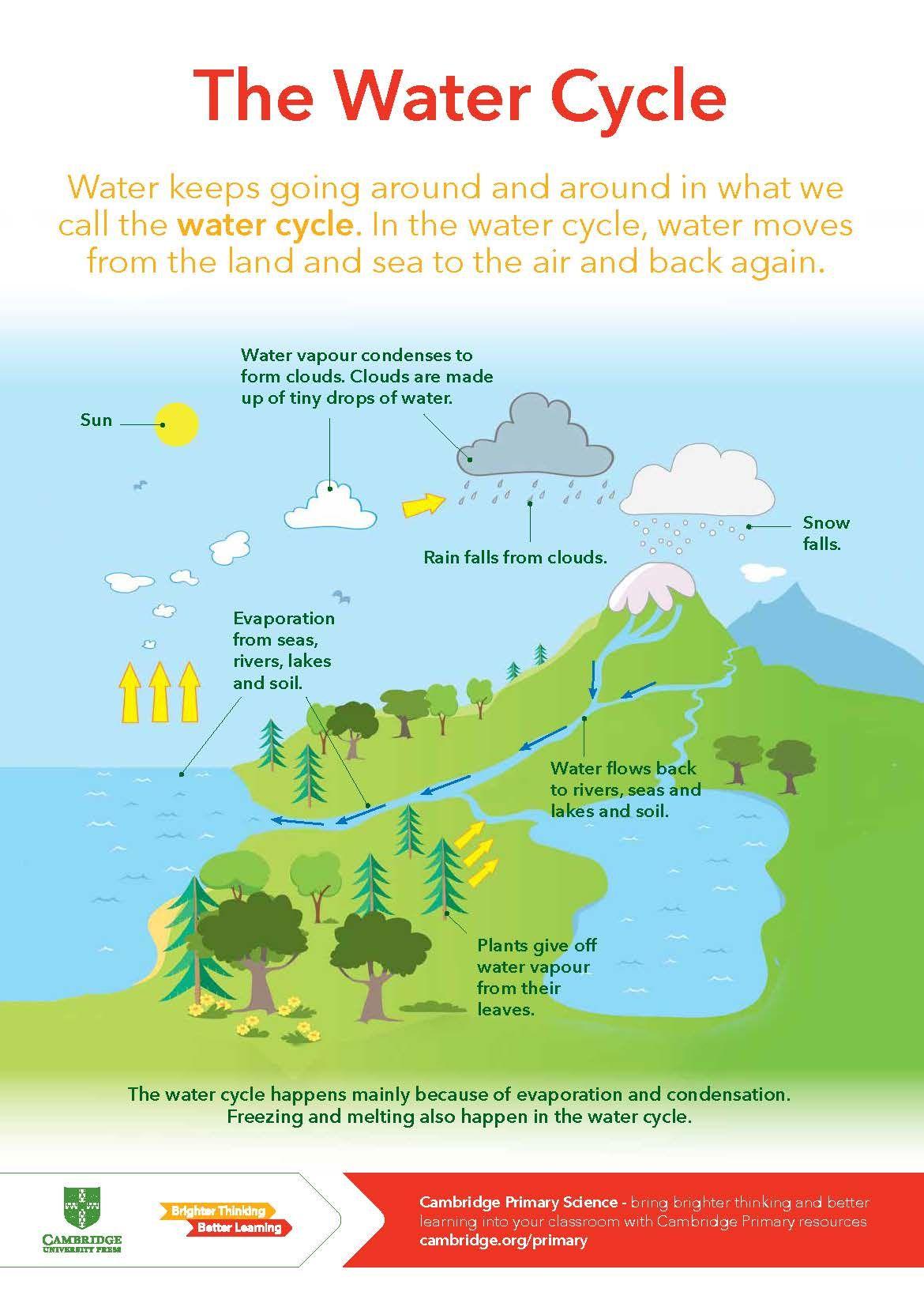 medium resolution of Cambridge Primary Science - The Water Cycle   Cambridge primary
