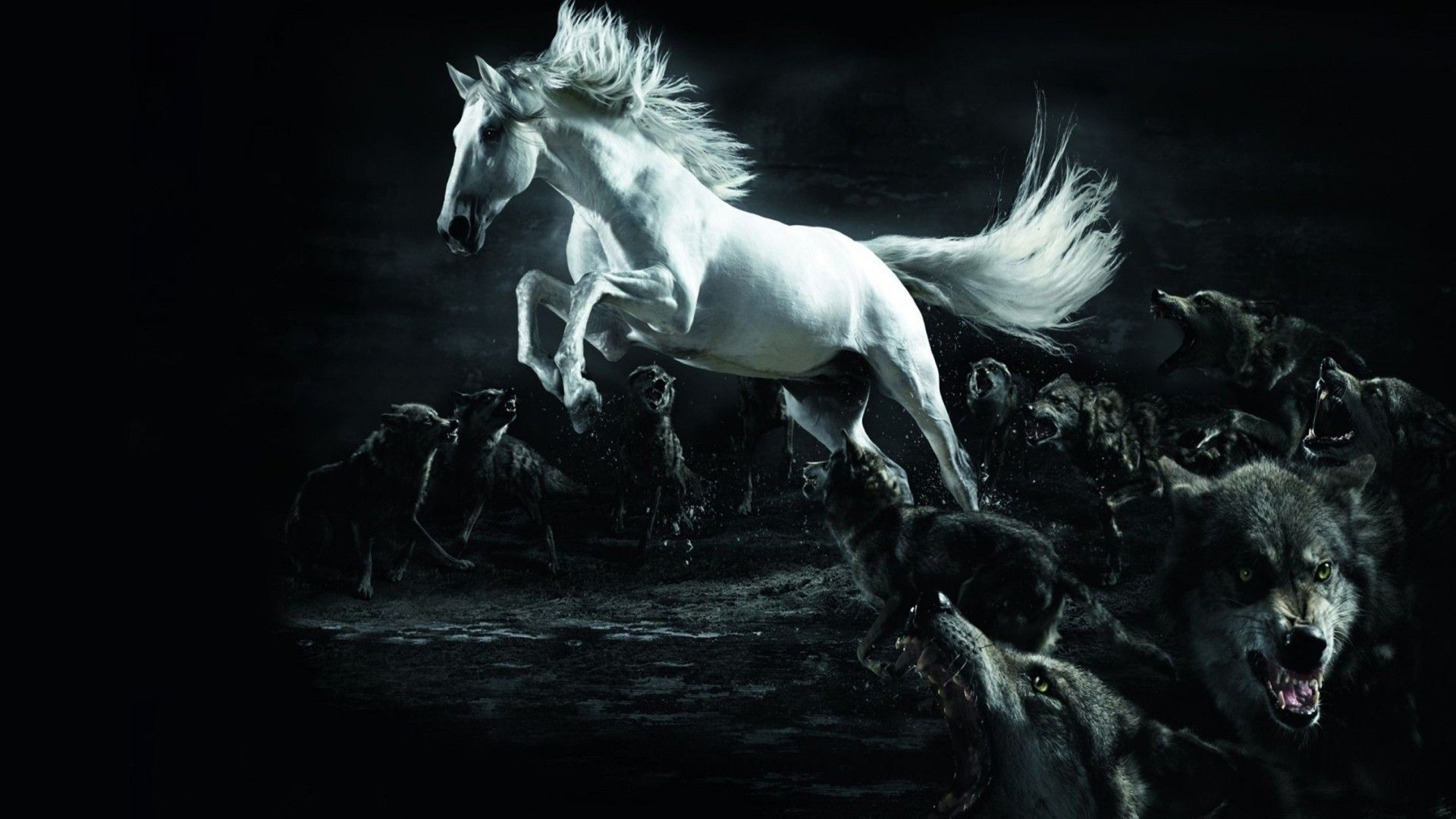 Simple Wallpaper Horse Ultra Hd - 68bdadab129eac59480fb6fe64303183  Image_628821.jpg