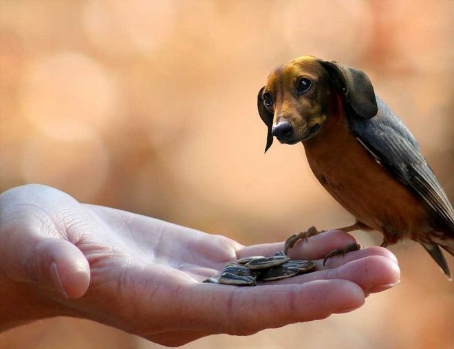 Dogs + Birds = Dirds