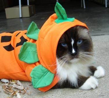 Cat Halloween Costumes From Kmart Pet Costumes Halloween Cat