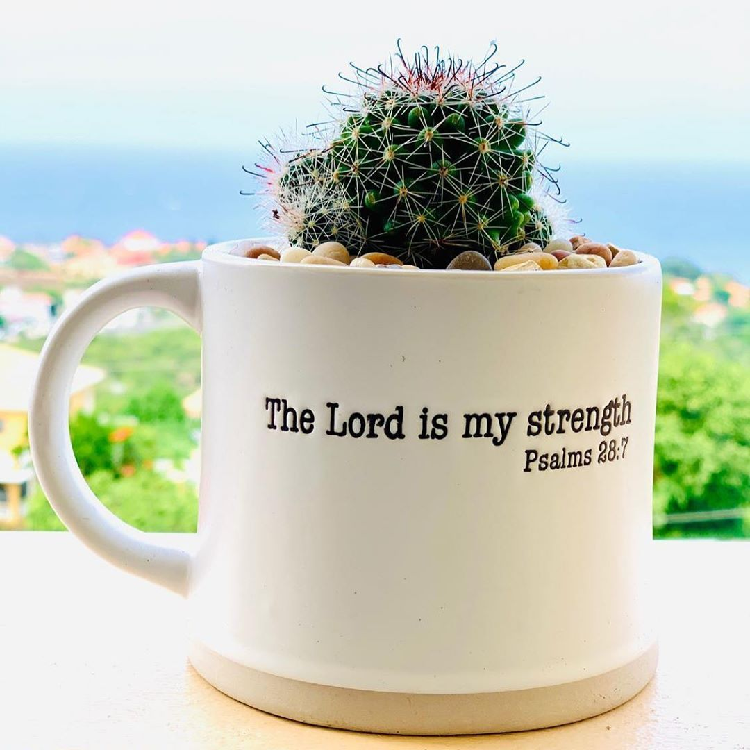 """Succulent Sensations on Instagram: """"Have a blessed Sunday ."""""""