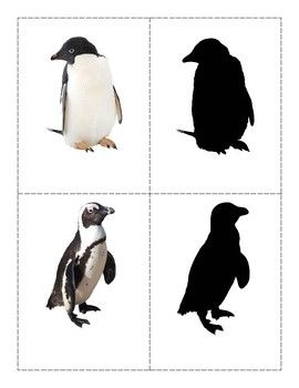 This Is A Fun Activity For Younger Children In Your Class Torecognize Learn The Names And Match These Popular Penguins To Thei Penguins Picture Cards Shadow
