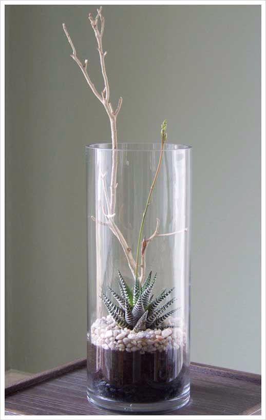 Wintery Terrarium Succulents Pinterest Terrarium Plants And
