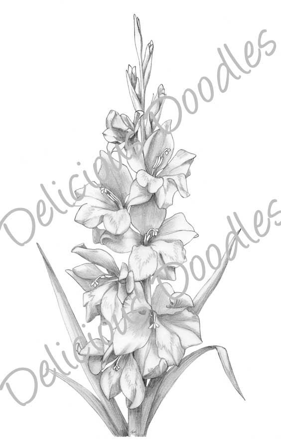 Gladiolus Flower Drawing Gladiolus Flower Flower Drawing Gladiolus Tattoo