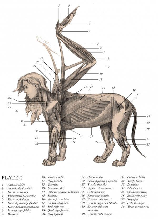 The Resurrectionist | Mythological creatures, Extinct and Anatomy