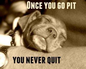 So True Pitbulls Dog Love Dogs