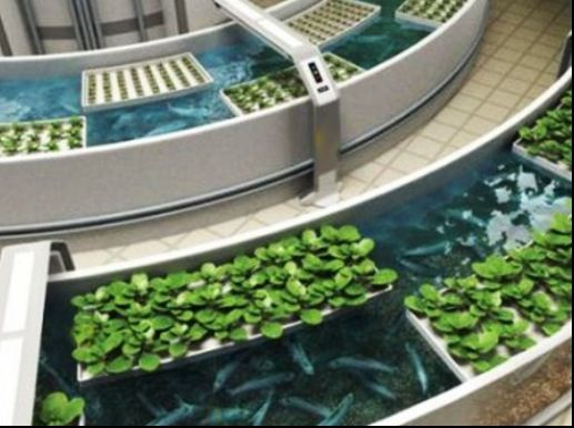 I love these floating bed aquaponic systems aquaponics for Fish and plants in aquaponics