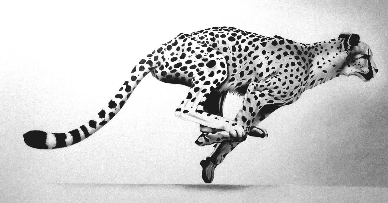 Pin by Isuru Rodrigo on A R T z Drawings, Pencil, Animals