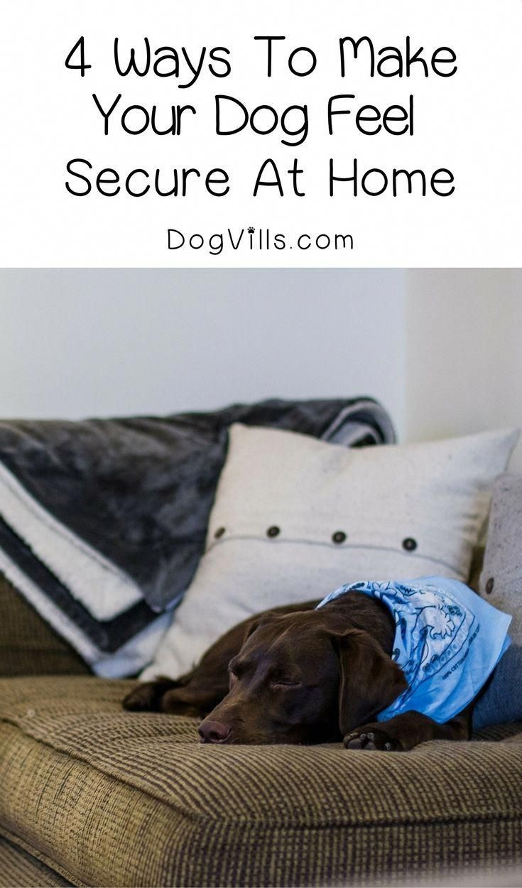 How to Choose the Perfect Dog Bed For Your Pet Anxious