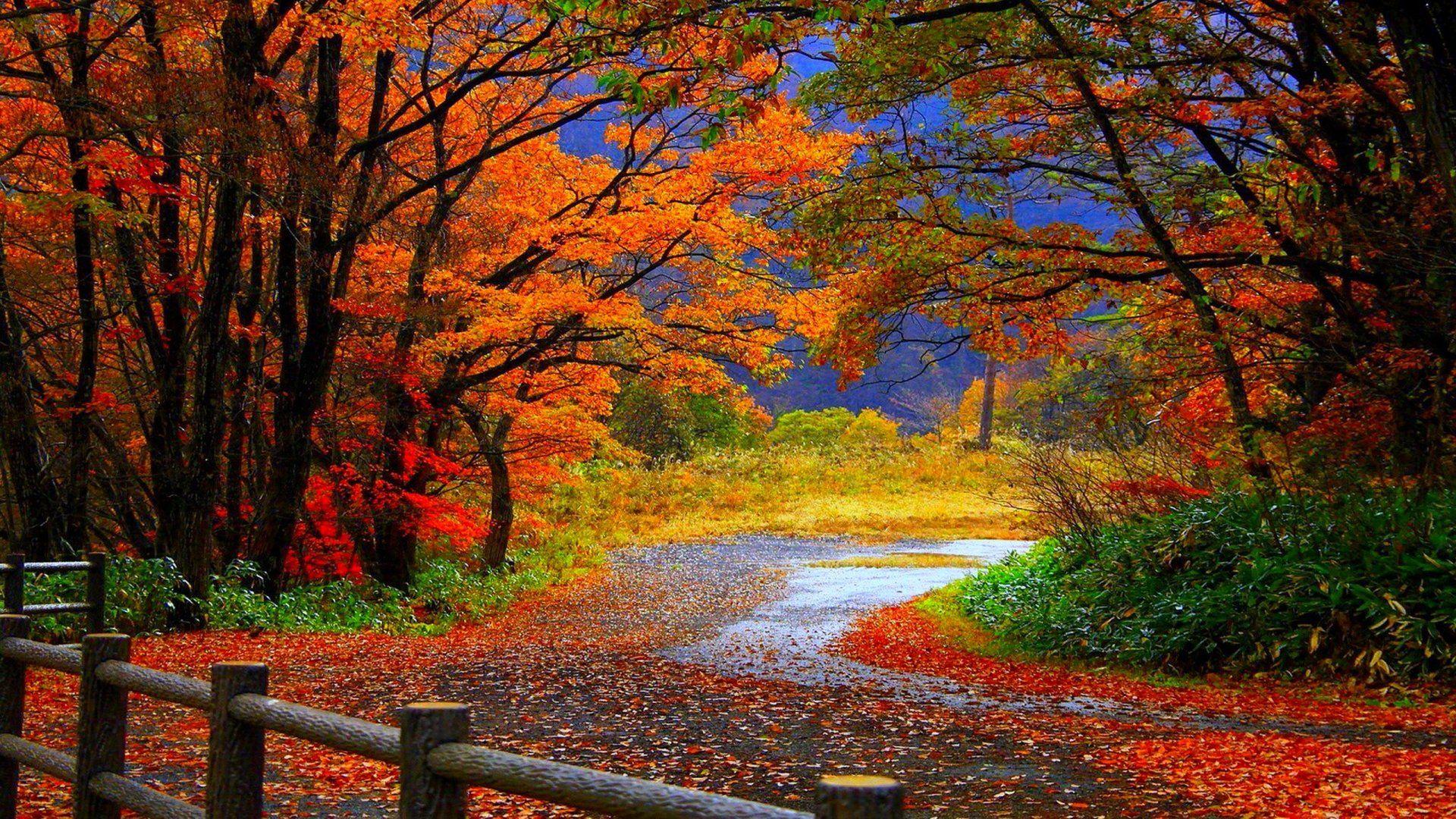 Autumn Fall Trees Fence Path Trail Colorful Leaves Foliage Wallpaper 1920x1080 524504 Wallp Scenery Wallpaper Landscape Wallpaper Desktop Wallpaper Fall
