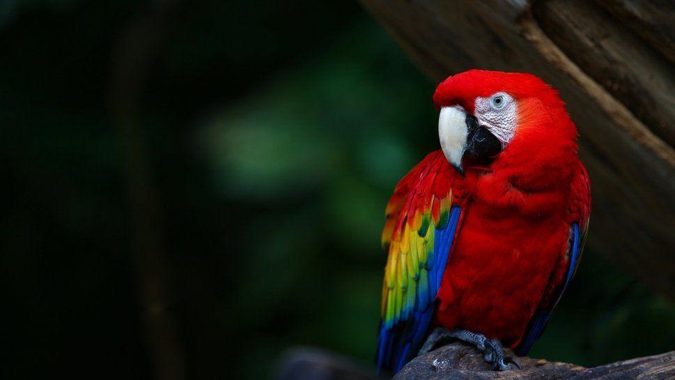 Guacamayas rojas liberadas en Chiapas se reproducen por primera vez – emeequis