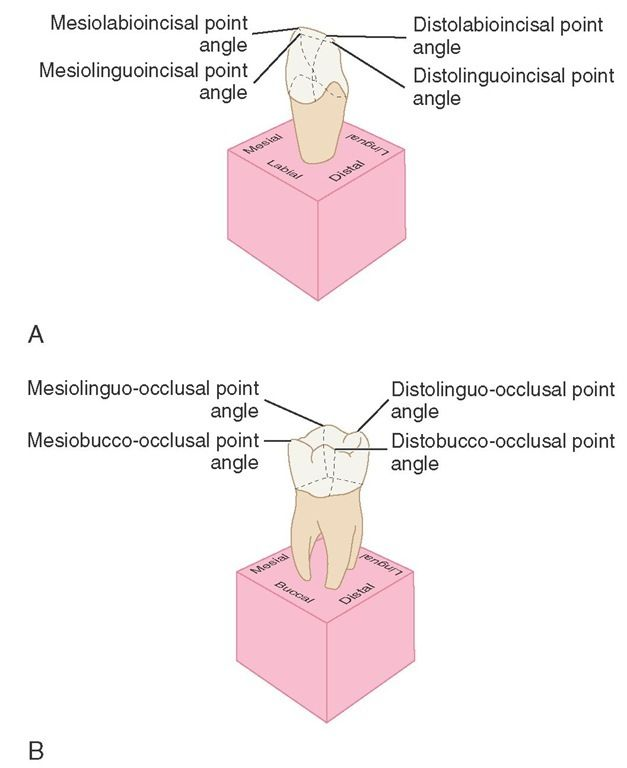 A, Point angles on anterior teeth. B, Point angles on posterior ...