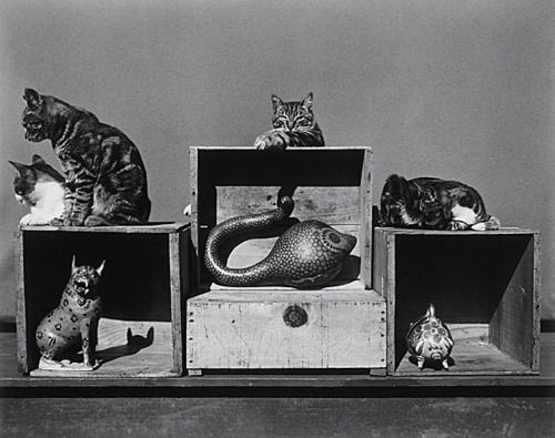 Edward Weston, Cat and Juguettes. 1944