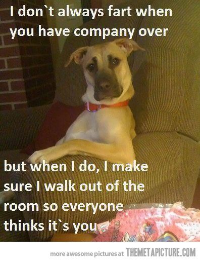 Hahaha I have two dogs that do this!