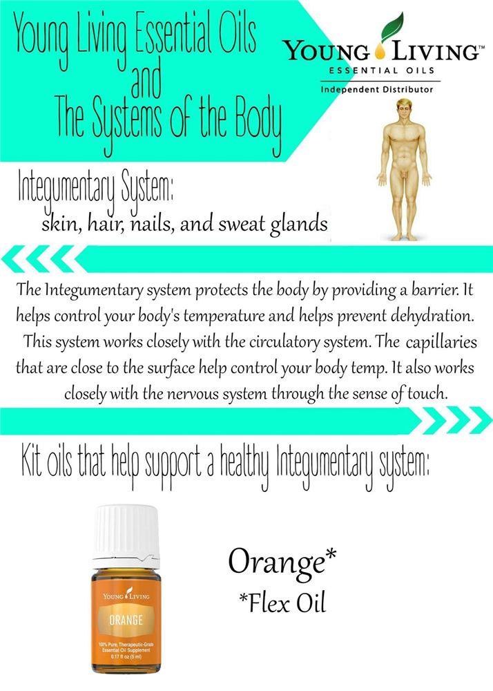 Colorful Hair Integumentary System Gift - Anatomy Ideas - yunoki.info