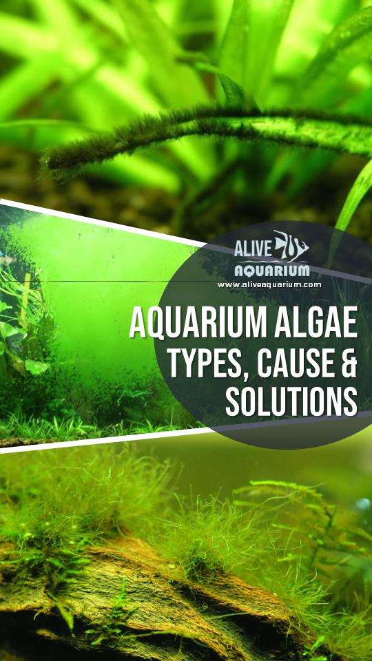 Aquarium Algae Control Top 10 Algae Busting Tips Aquarium Algae Fresh Water Fish Tank Algae