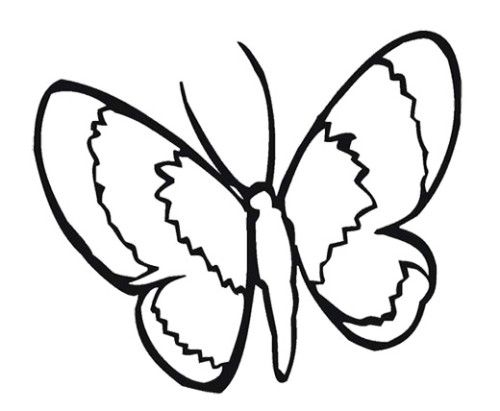 Animals Simple Butterfly Coloring Pages Kids Coloring