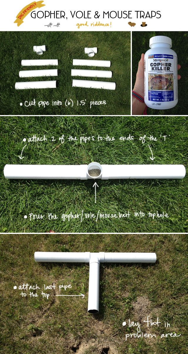 diy dog friendly gopher vole and mouse traps for your lawn with pvc pipes