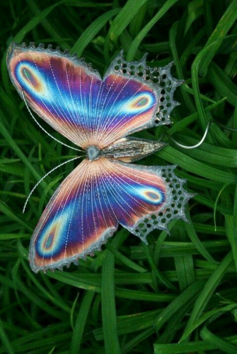 Golden cocoon butterfly Beautiful nature pictures