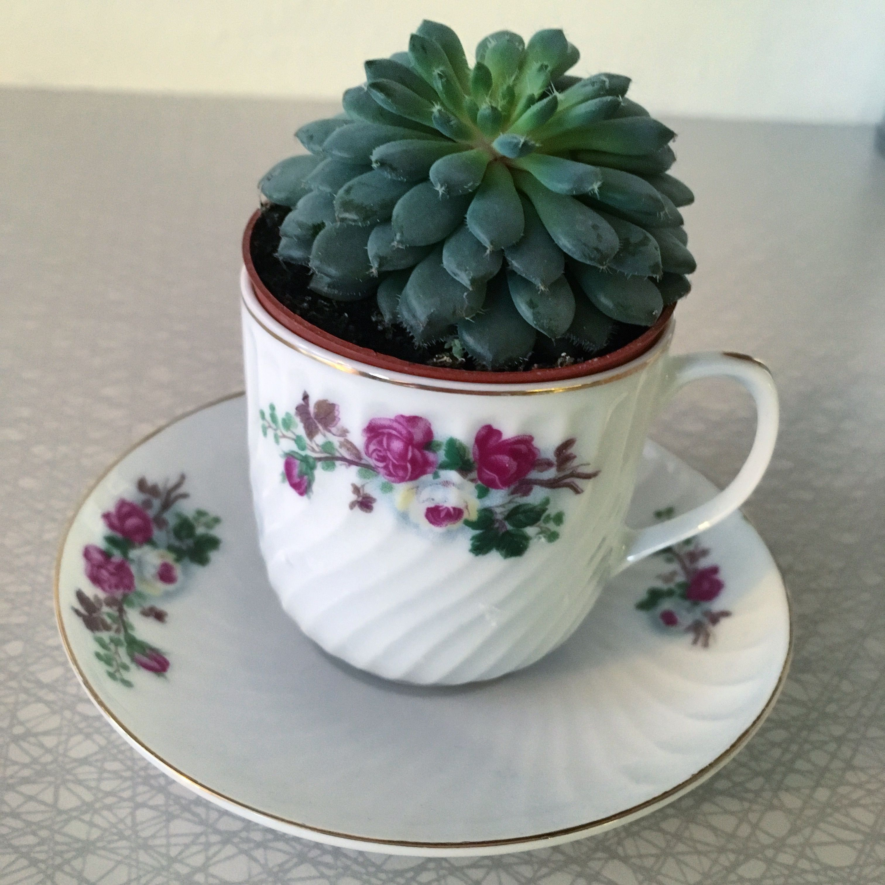 A great idea to plant a succulent