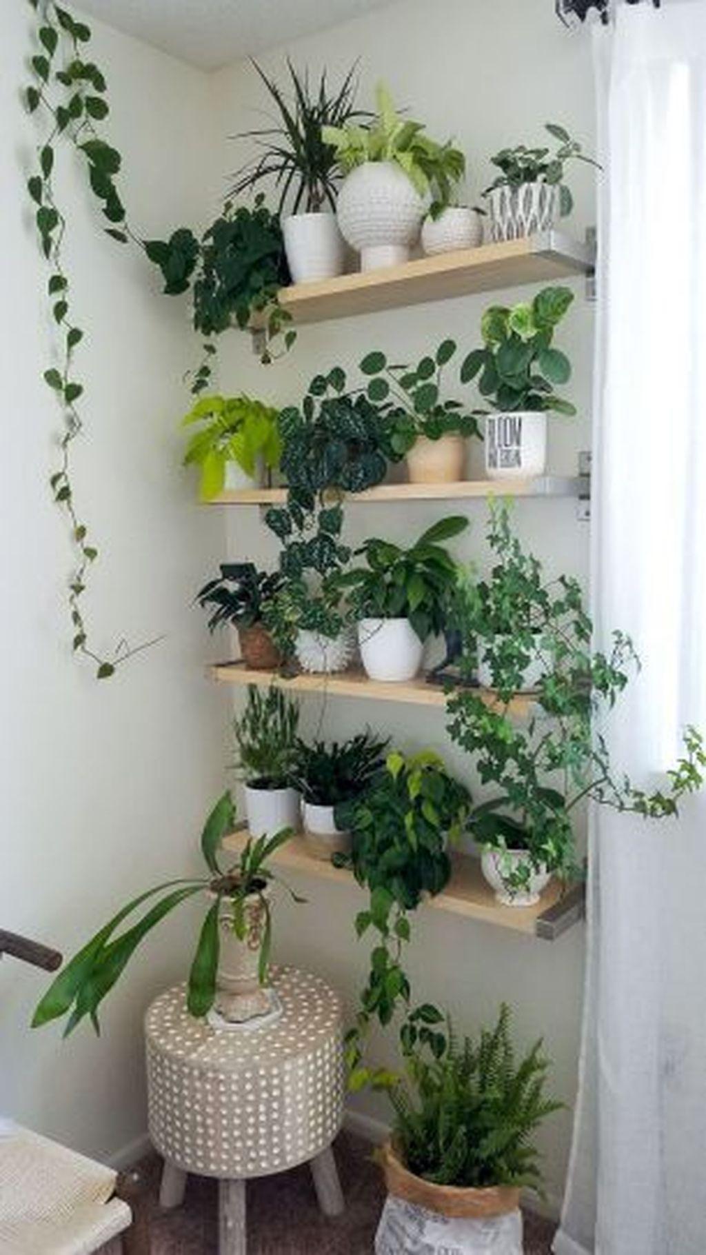 43 Easy House Plants Decor Ideas