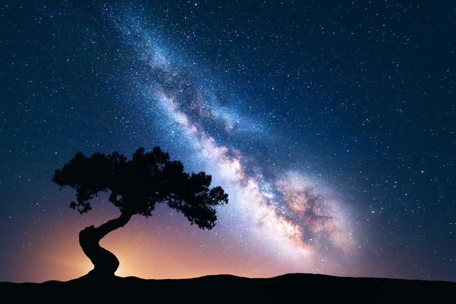 Stunning Astrophotography Photo Of Tree Silhouette Against Galaxy Astrophotography Night Landscape Northern Lights Photo