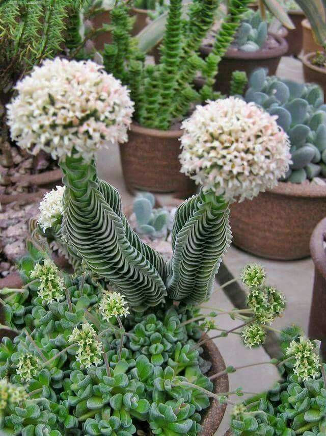 Pin de Sarah M en Flowers and Plants - Succulents | Pinterest ...