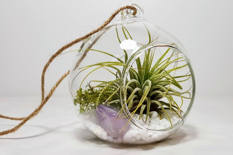 Amethyst Crystal Terrarium Kit with Air Plant February