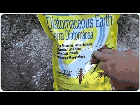 Controling Ants With Diatomaceous Earth Works Also Kills Fleas Roaches Many Other Pests Safe For Pets We Ve Eve Diatomaceous Earth Green Pest Control Ants