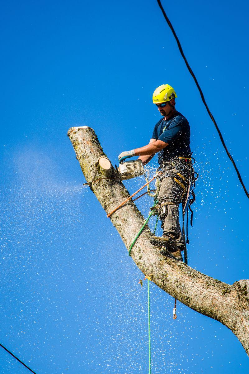 Jesse Martin Certified Arborist takes Removes Hazardous