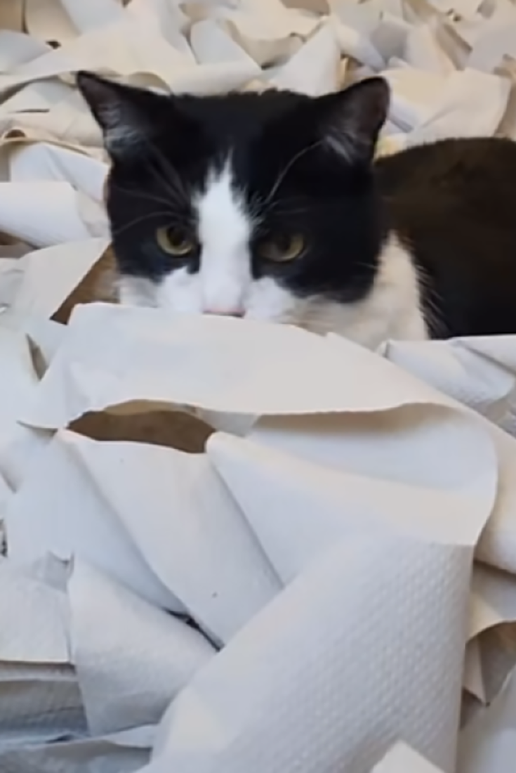 Cat Has Gone Mad In A Room Full Of Toilet Paper Cats Kittens Toiletpaper Gonemad Meow Pets Animals Cuteanimals Cu Cat Allergies Cute Animals Cute Cats