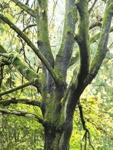 How To Get Rid Of Moss On A Tree
