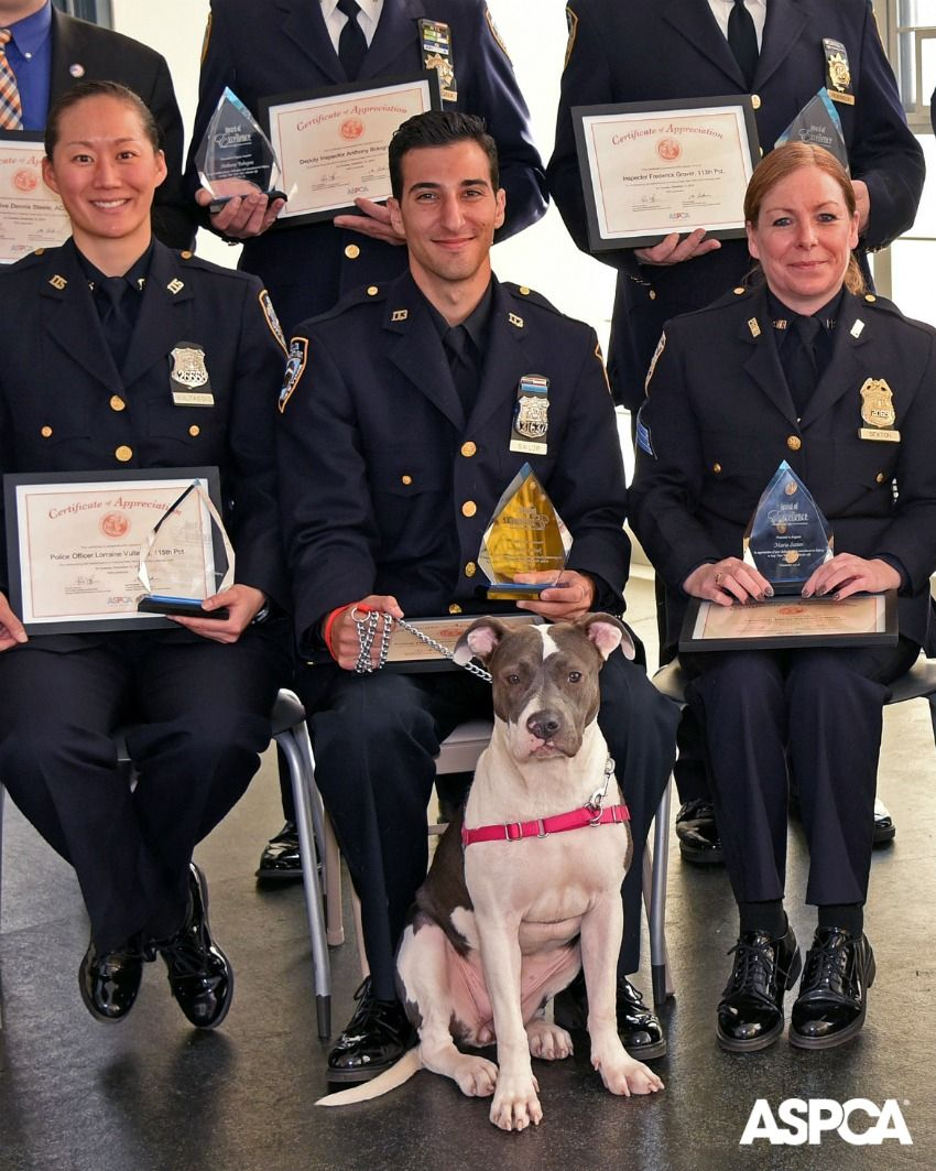 Aspca Honors Nypd Officers And Assistant District Attorneys For Excellence In Helping Nyc Animals Aspca Animal Advocacy Nypd