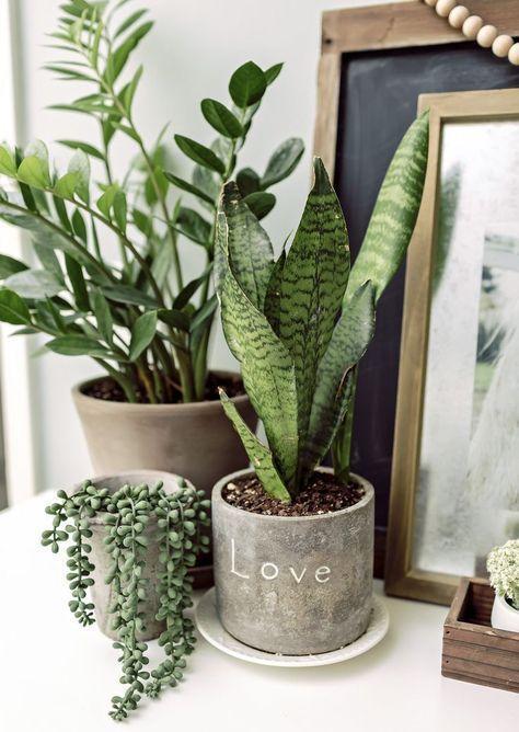 Zimmerpflanzen Hergestellt für einen Schwarz Thumb