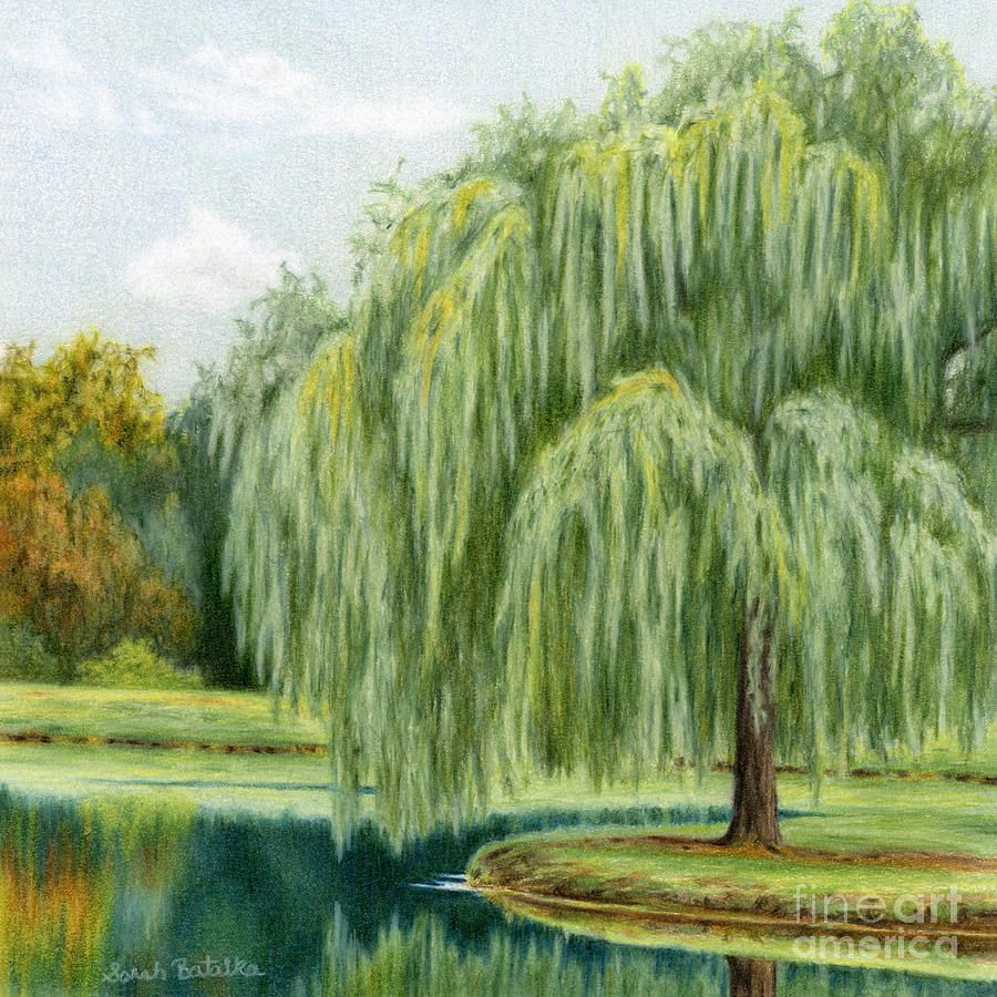 Willow Trees Painting - Under The Willow Tree by Sarah Batalka ...