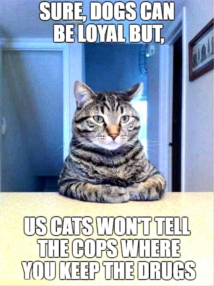 Funny Cat Memes So True In 2020 Funny Cat Memes Cat Memes Scary Cat