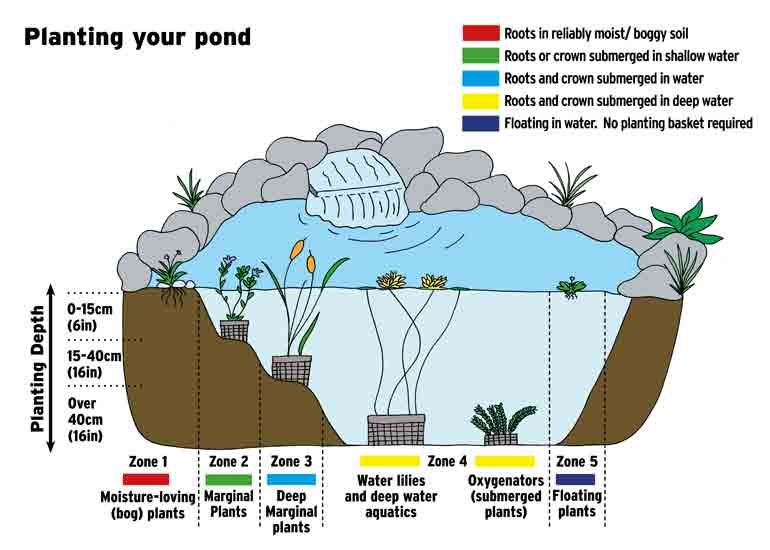 pond planting zones diagram garden ideas pond plants