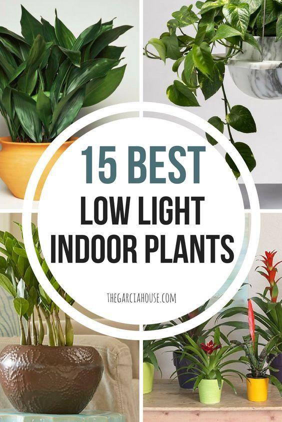 15 Best Low Light Indoor Plants Low Light House Plants Bathroom