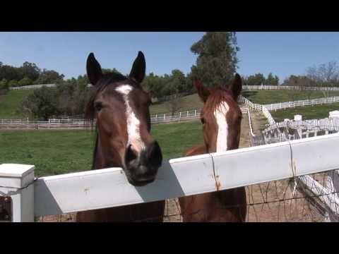 St. George's Farm, 130 Acre Horse Ranch, Moorpark Ca