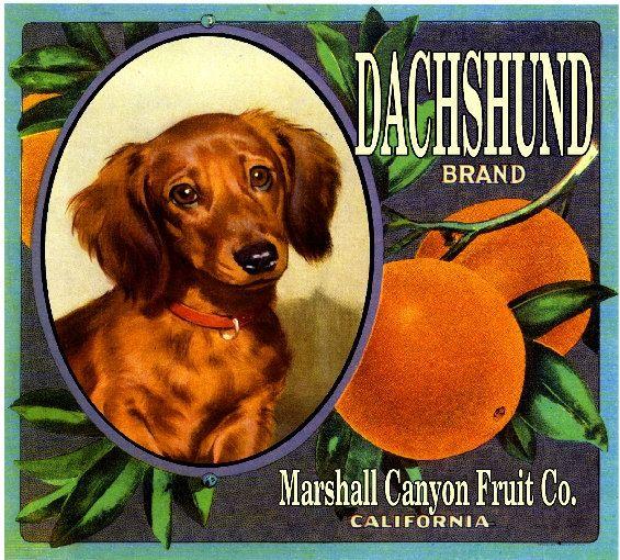The Marshall Canyon Collection Dachshund Dog Orange Citrus Fruit