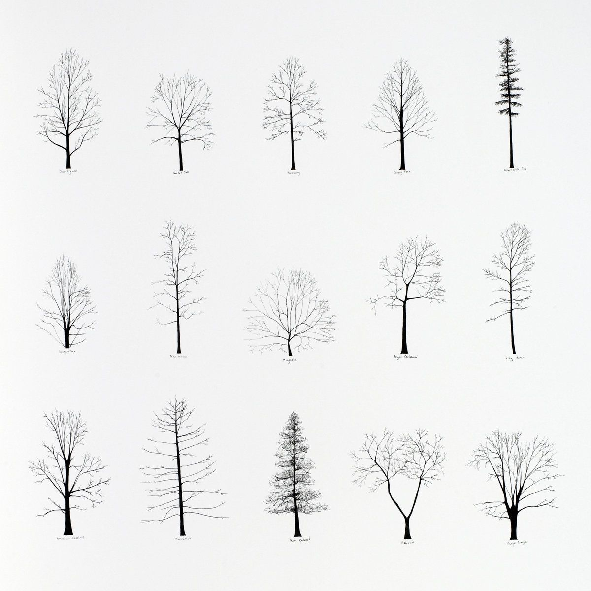 40+ images about ARQ / arbres on Pinterest   Trees, Katie O ...